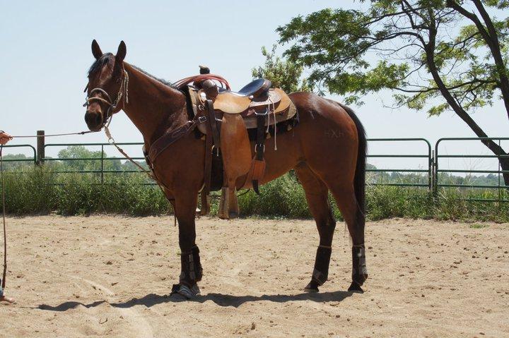 Barrel Racing Horses For Sale The Barrel Racing Blog